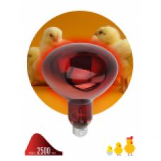 FITO Лампы тип цоколя E27 ЭРА ИКЗК 220-250 R127